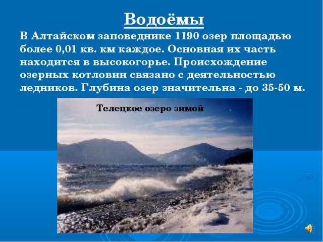 В Алтайском заповеднике 1190 озер площадью более 0,01 кв. км каждое. Основная...