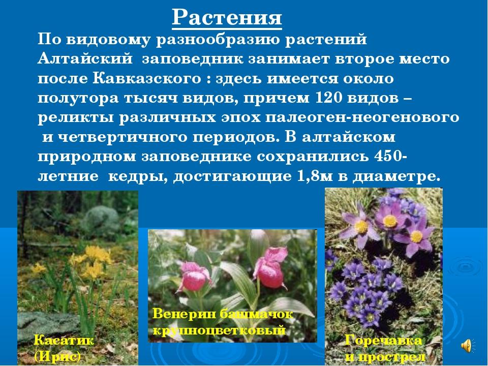 Касатик (Ирис) По видовому разнообразию растений Алтайский заповедник занимае...
