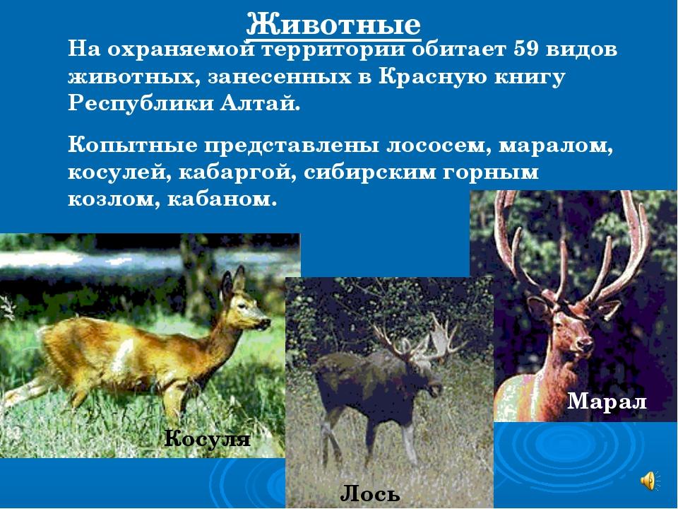 На охраняемой территории обитает 59 видов животных, занесенных в Красную книг...