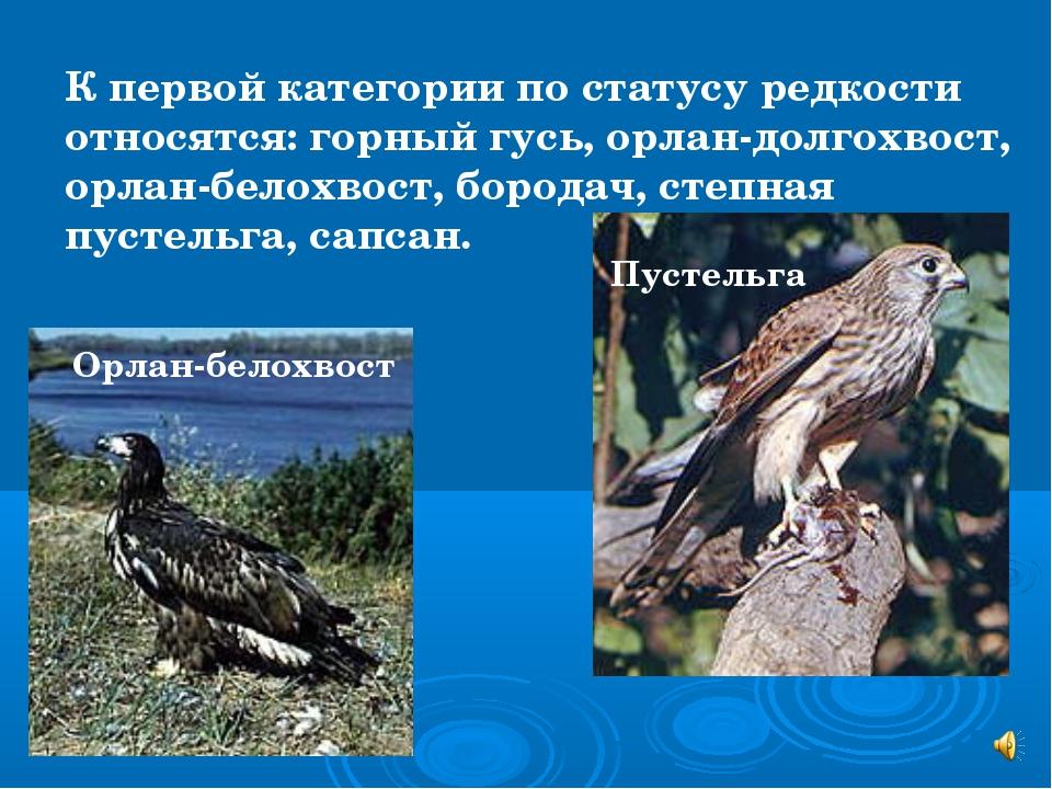К первой категории по статусу редкости относятся: горный гусь, орлан-долгохво...
