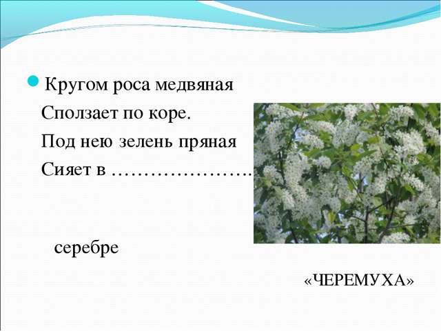 Кругом роса медвяная Сползает по коре. Под нею зелень пряная Сияет в …………………....