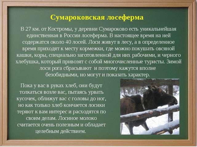 Сумароковская лосеферма В 27 км. от Костромы, у деревни Сумароково есть уника...