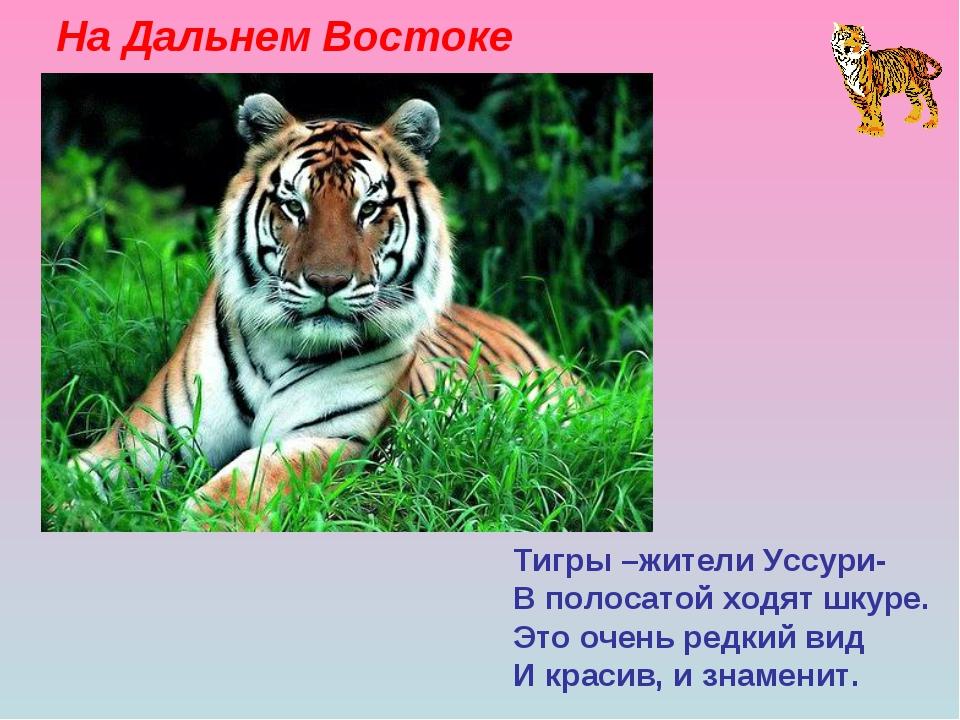 На Дальнем Востоке Тигры –жители Уссури- В полосатой ходят шкуре. Это очень р...