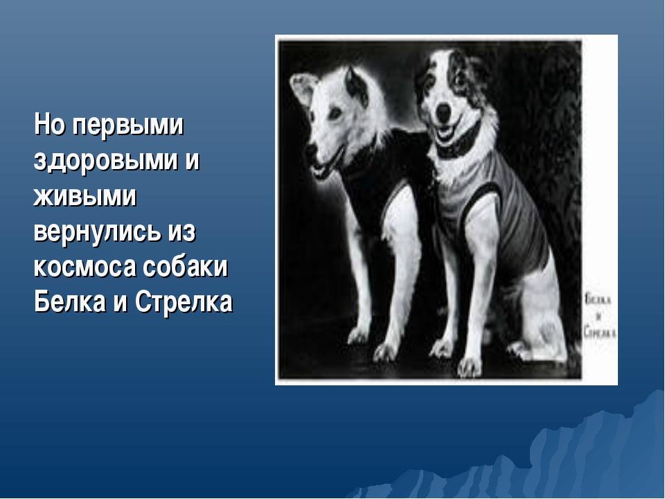 Но первыми здоровыми и живыми вернулись из космоса собаки Белка и Стрелка