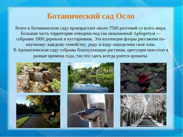 Ботанический сад Осло Всего в Ботаническом саду произрастает около 7500 расте...