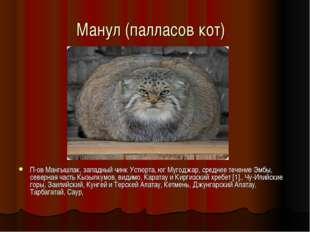 Манул (палласов кот) П-ов Мангышлак, западный чинк Устюрта, юг Мугоджар, сре