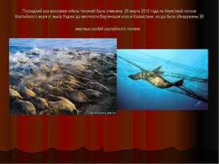 Последний раз массовая гибель тюленей была отмечена 25 марта 2012 года на бе