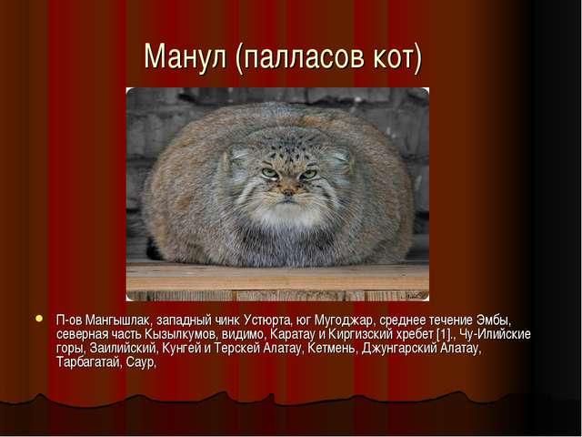 Манул (палласов кот) П-ов Мангышлак, западный чинк Устюрта, юг Мугоджар, сре...