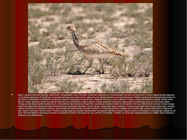 Джек - редкая, местами обычная, перелетная, гнездящаяся птица. Населяет глин...