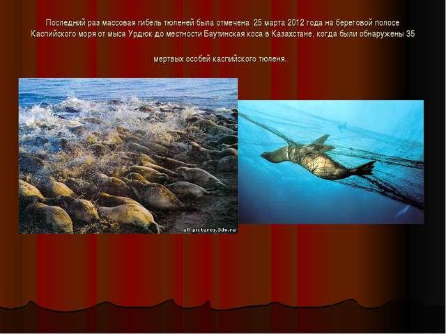 Последний раз массовая гибель тюленей была отмечена 25 марта 2012 года на бе...