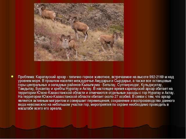 Проблема: Каратауский архар - типично горное животное, встречаемое на высоте...