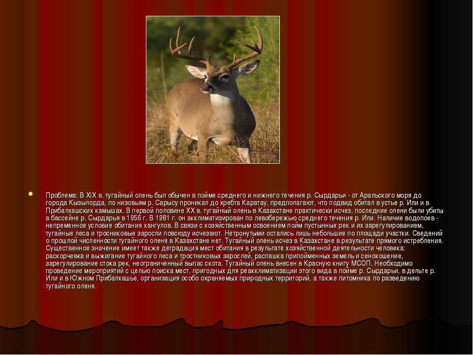Проблема: В XIX в. тугайный олень был обычен в пойме среднего и нижнего течен...