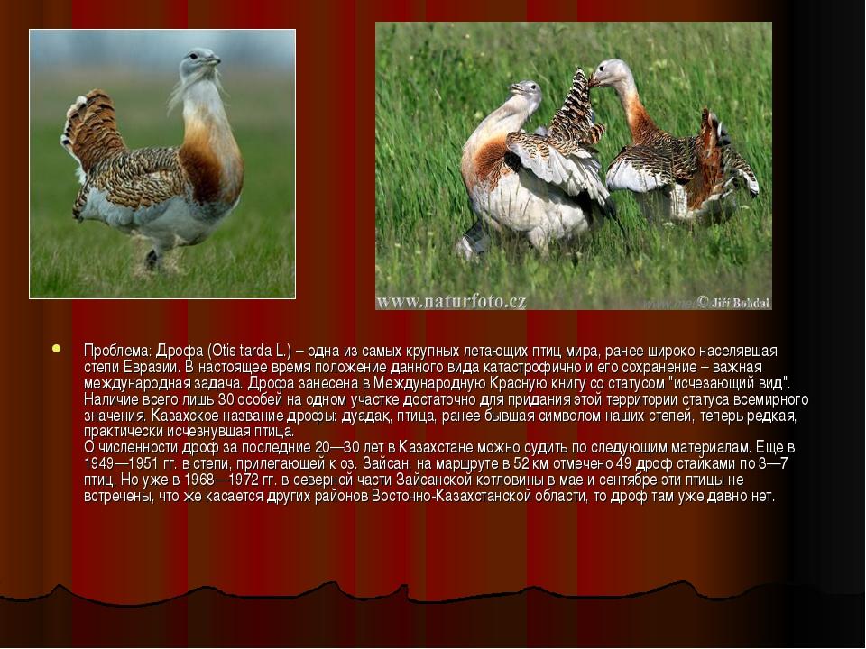 Проблема: Дрофа (Otis tarda L.) – одна из самых крупных летающих птиц мира, р...