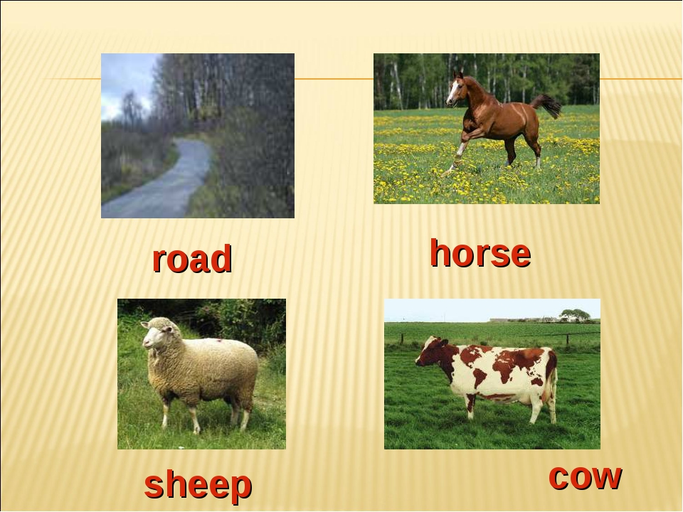 road horse sheep cow