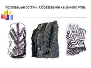 Ископаемые остаткиископаемые останкиисиииииииссис Ископаемые остатки. Образов