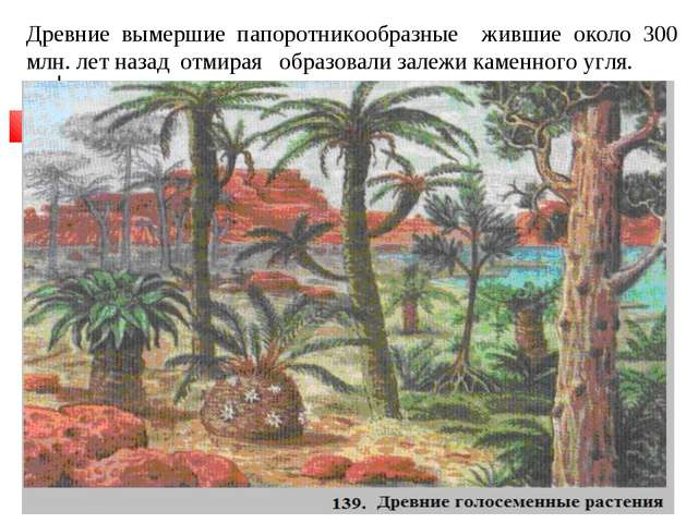 Древние вымершие папоротникообразные жившие около 300 млн. лет назад отмирая...