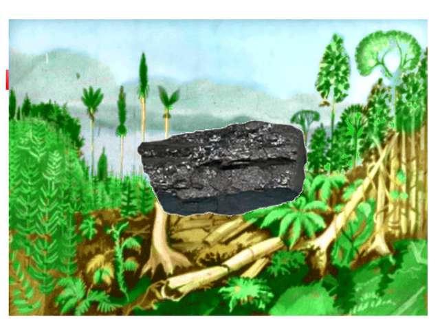 Образованиеобиииииии каменного угля