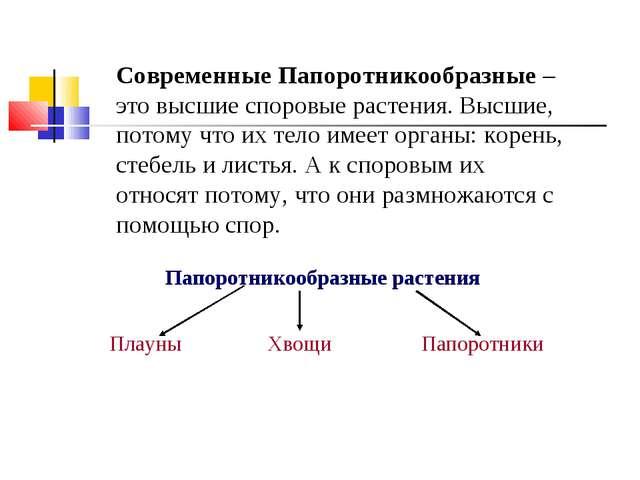 Папоротникообразные растения Плауны Хвощи Папоротники Современные Папоротник...