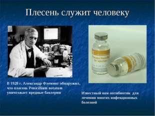 Плесень служит человеку В 1928 г. Александр Флеминг обнаружил, что плесень Pe
