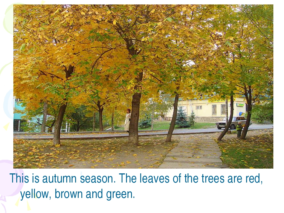 This is autumn season. The leaves of the trees are red, yellow, brown and gre...
