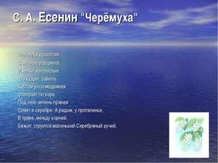 """С. А. Есенин """"Черёмуха"""" Черёмуха душистая С весною расцвела И ветки золотисты"""