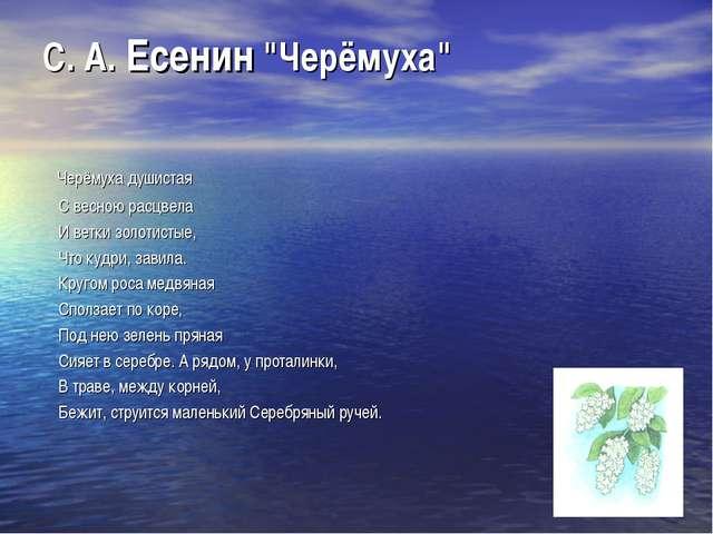"""С. А. Есенин """"Черёмуха"""" Черёмуха душистая С весною расцвела И ветки золотисты..."""