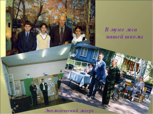 В музее леса нашей школы Рождение Экологического отряда Экологический лагерь