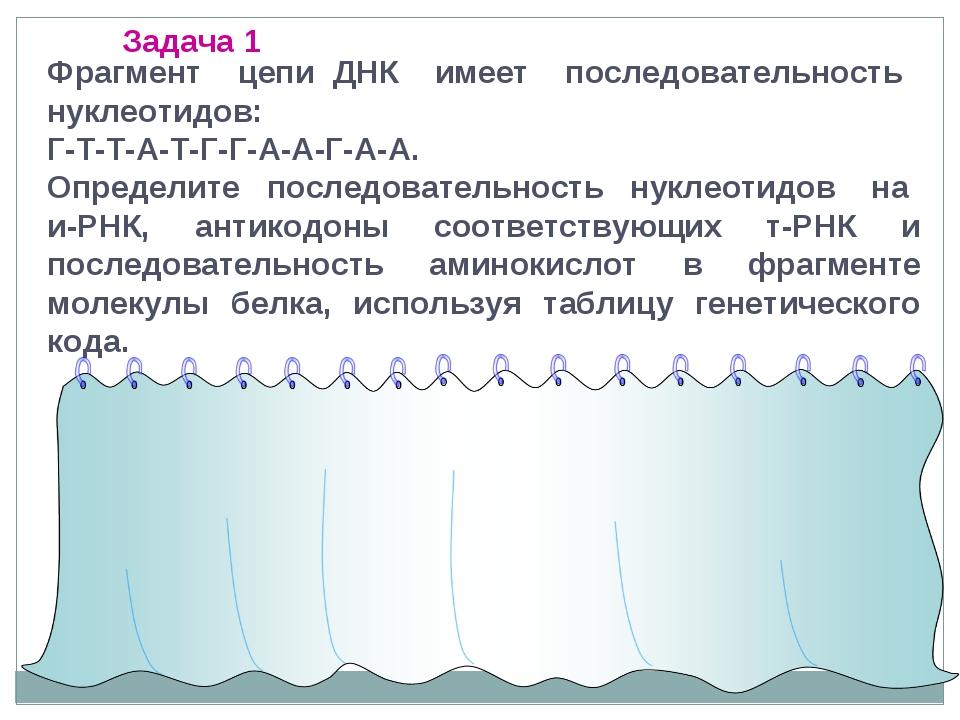 Фрагмент цепи ДНК имеет последовательность нуклеотидов: Г-Т-Т-А-Т-Г-Г-А-А-Г-А...