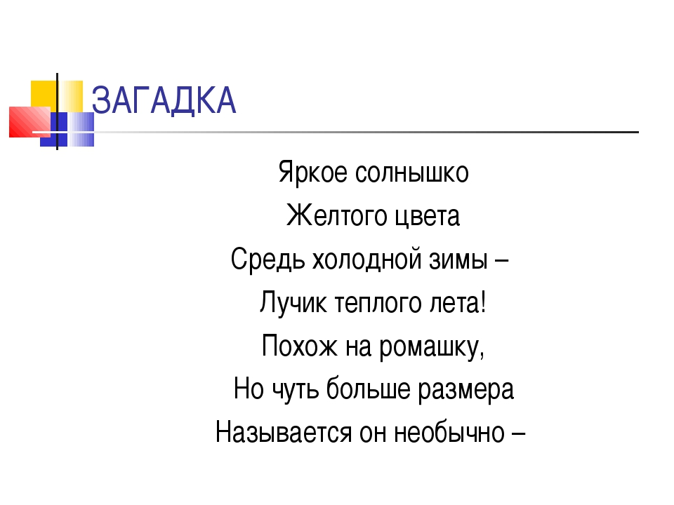 ЗАГАДКА Яркое солнышко Желтого цвета Средь холодной зимы – Лучик теплого лета...