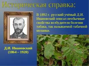 Д.И. Ивановский (1864 – 1920) В 1892 г. русский учёный Д.И. Ивановский описал
