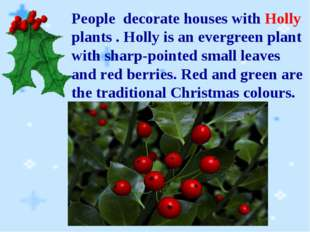 People decorate houses with Holly plants . Holly is an evergreen plant with s