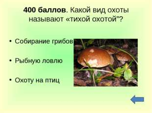 """400 баллов. Какой вид охоты называют «тихой охотой""""? Собирание грибов Рыбную"""