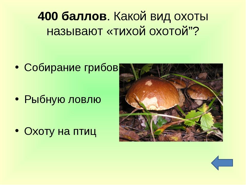 """400 баллов. Какой вид охоты называют «тихой охотой""""? Собирание грибов Рыбную..."""