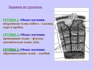 Задания по группам: ГРУППА 1. Объект изучения: покровнаая ткань побега – кож