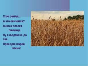 Спит земля… А что ей снится? Снится спелая пшеница. Ну а людям не до сна: При