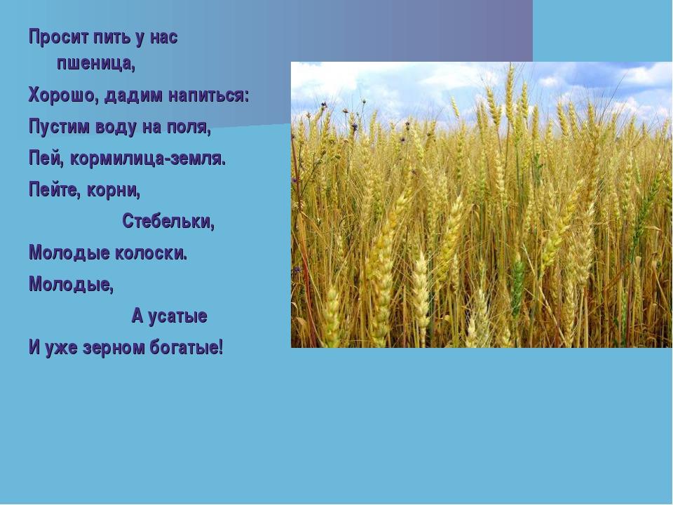 Просит пить у нас пшеница, Хорошо, дадим напиться: Пустим воду на поля, Пей,...