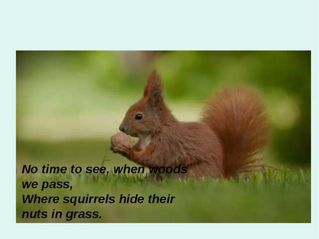 No time to see, when woods we pass, Where squirrels hide their nuts in grass.