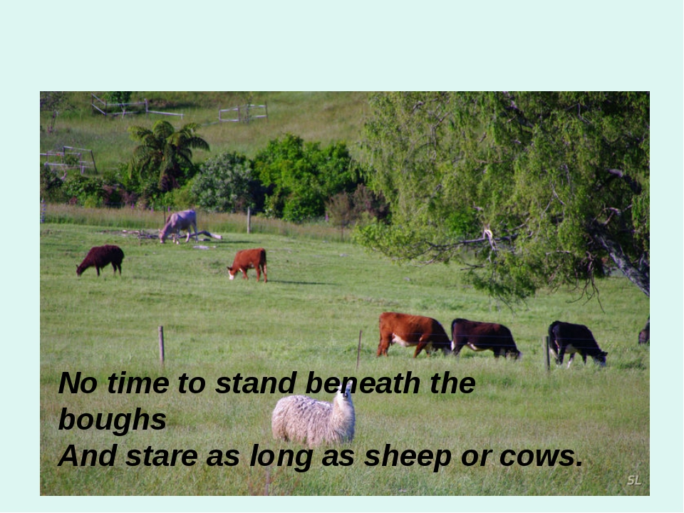 No time to stand beneath the boughs And stare as long as sheep or cows.