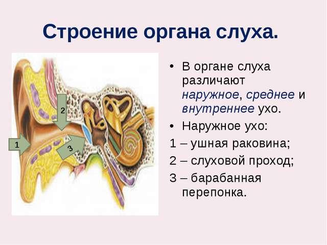 Строение органа слуха. В органе слуха различают наружное, среднее и внутренн...