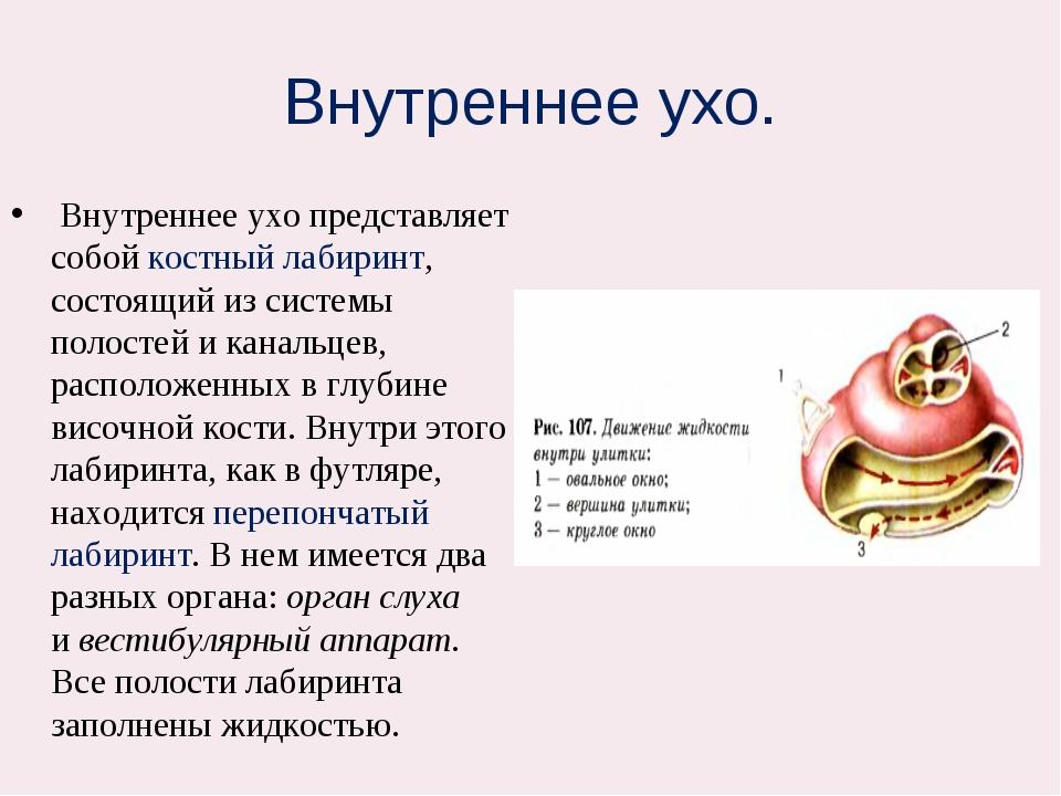 Внутреннее ухо. Внутреннее ухо представляет собой костный лабиринт, состоящи...