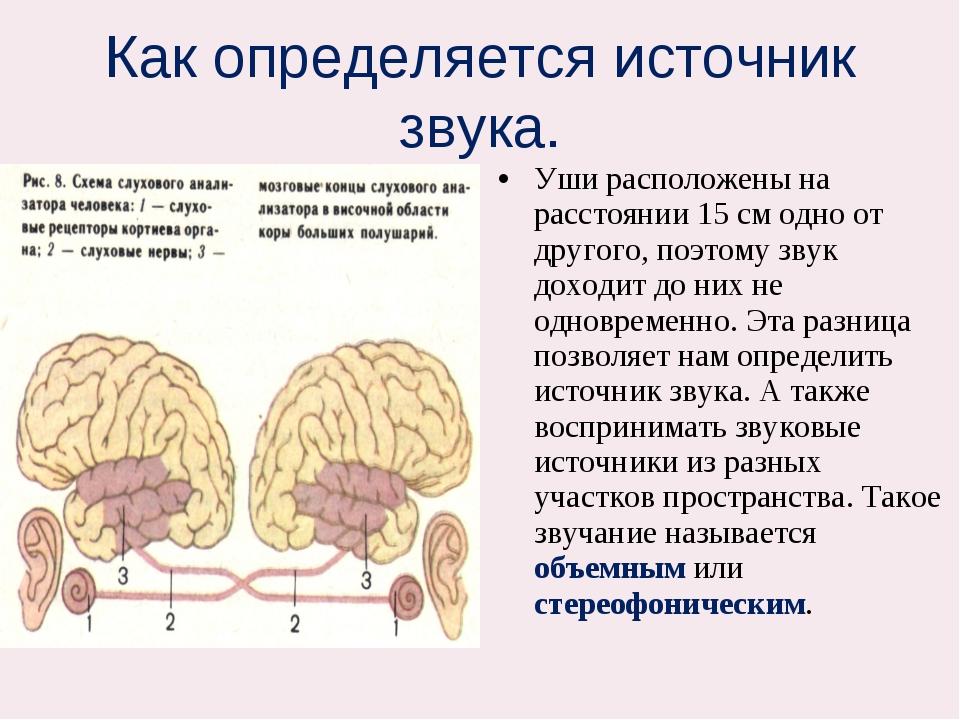 Как определяется источник звука. Уши расположены на расстоянии 15 см одно от...