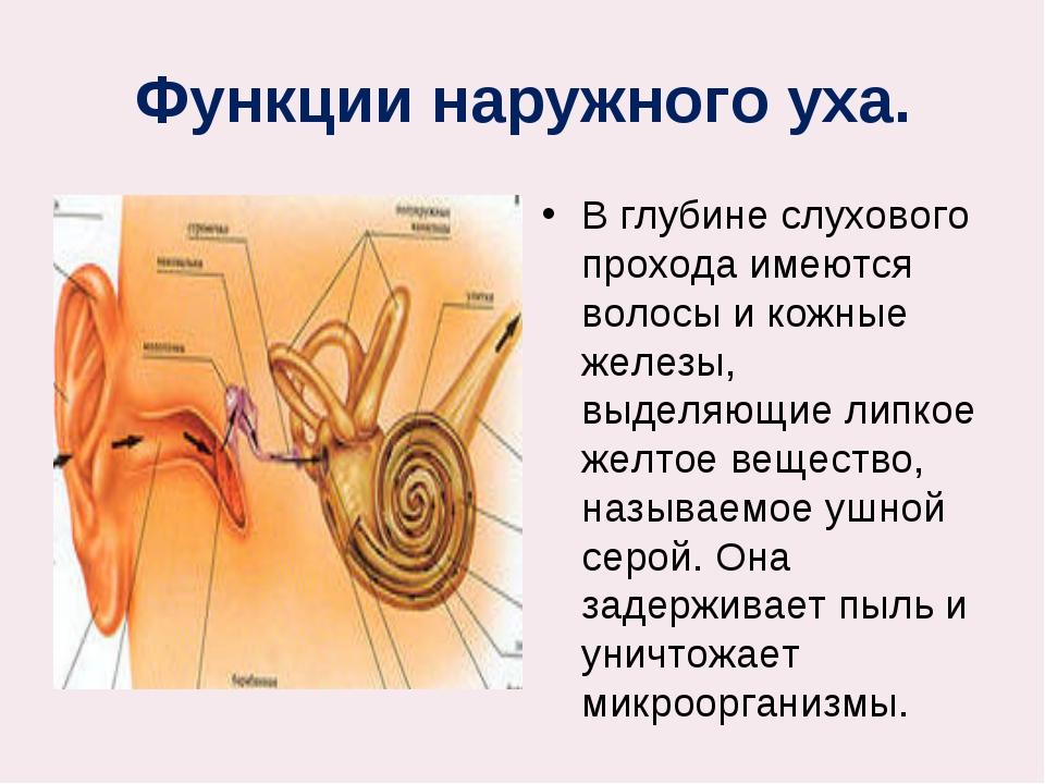 Функции наружного уха. В глубине слухового прохода имеются волосы и кожные же...