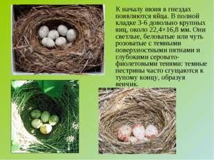 К началу июня в гнездах появляются яйца. В полной кладке 3-6 довольно крупны