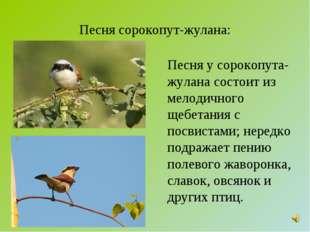 Песня сорокопут-жулана: Песня у сорокопута-жулана состоит из мелодичного щебе