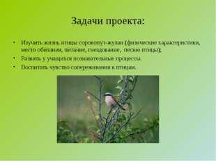 Задачи проекта: Изучить жизнь птицы сорокопут-жулан (физические характеристик