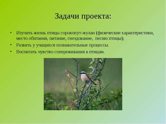 Задачи проекта: Изучить жизнь птицы сорокопут-жулан (физические характеристик...