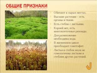 Обитают в сырых местах. Высшие растения – есть органы и ткани. Есть стебли с