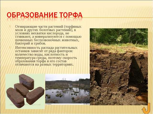 Отмирающие части растений (торфяных мхов и других болотных растений), в услов...