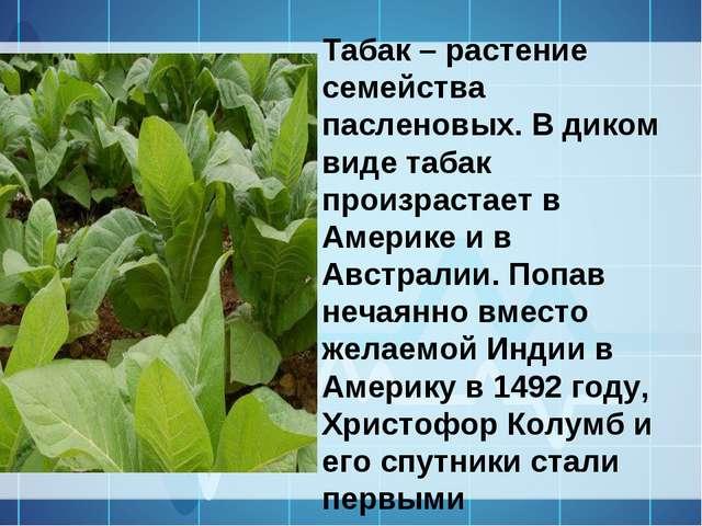 Табак – растение семейства пасленовых. В диком виде табак произрастает в Амер...
