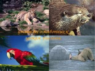 узнать все о животных к урокам биологии